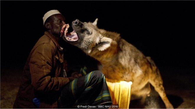 Yusse, một cư dân Harar, là người có mối quan hệ thân thiết, gần gũi với đàn linh cẩu. Ông gọi chúng vào nhà và cầm thức ăn trên tay cho chúng ăn
