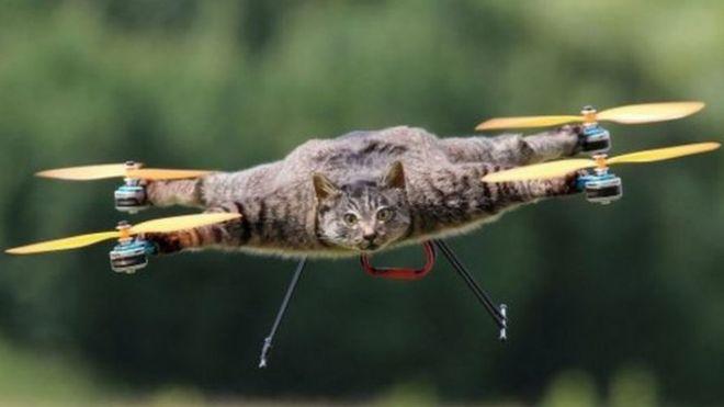 Oville, o gato voador