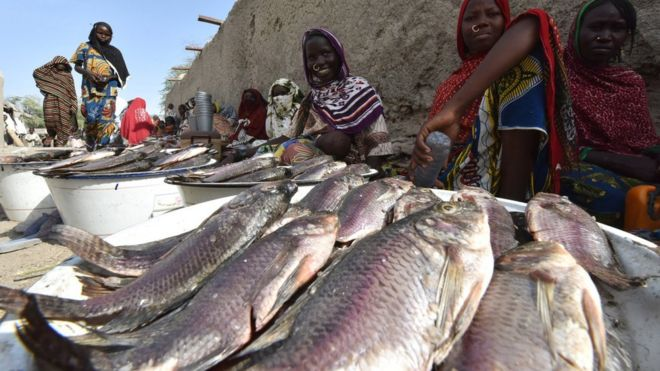 Vendors selling fish in Baga Sola in Chad pictured in January 2015