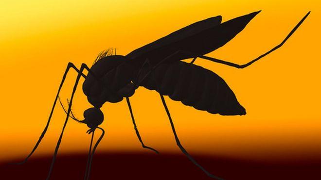 Zika cover image