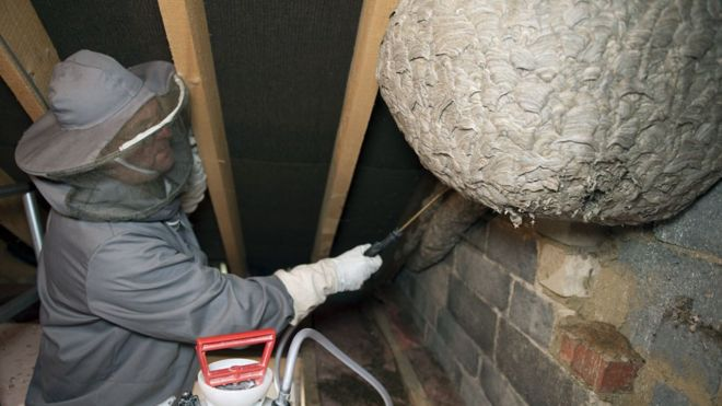 Gary Wilkinson with wasp nest