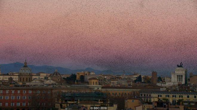 Một trời sáo đá chao lượn trên thành phố Rome của Ý