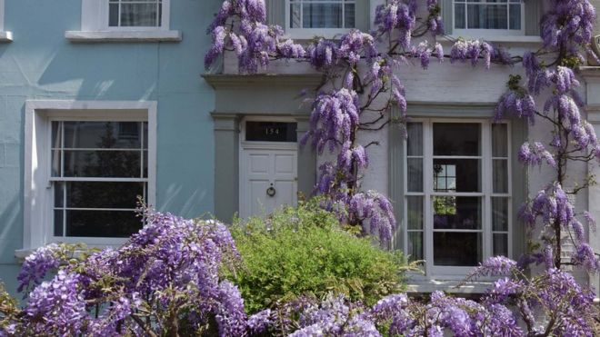 Wisteria on a house (Image: BBC)