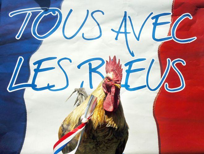 Gallo francés