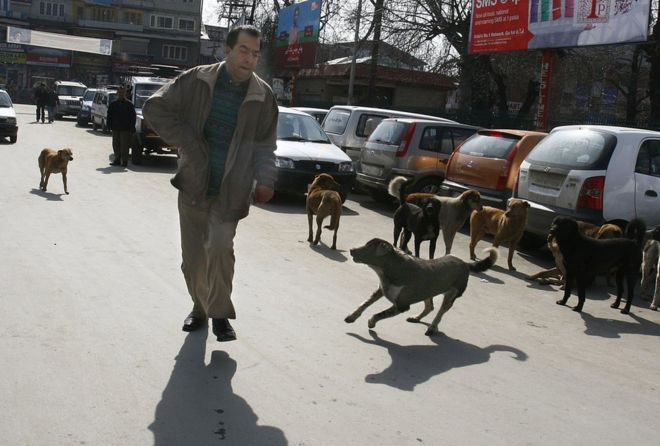 Kashmir dogs