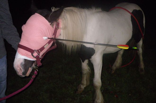 """Image copyright RSPCA The RSPCA said the horse had a """"lucky escape"""""""