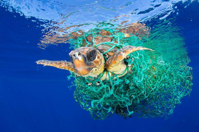 صورة لسلحفاة بحرية علقت في شباك صيد قبالة سواحل تينيريف، بجزر الكناري.