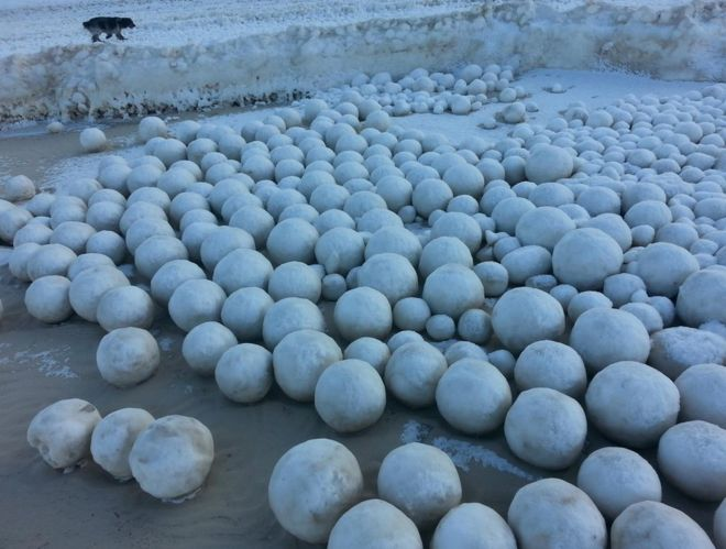 La curiosa aparición de bolas de nieve gigantes en una playa rusa