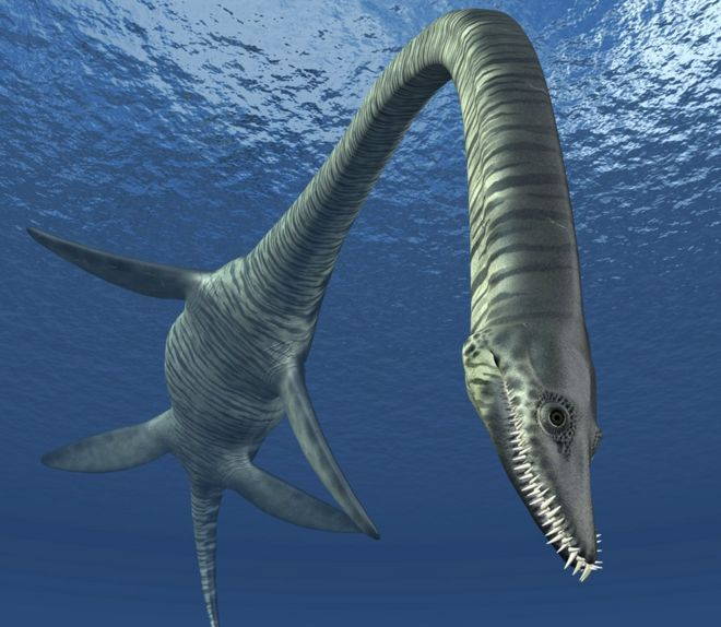 fish as old as dinosaurs discovered Paleontologists discover the most diverse dinosaur fossil fossils of 'largest' dinosaur found in argentina (update a malaysian university unveiled on wednesday what researchers called the first dinosaur fossil ever found in the country the tooth of a fish-eating predator estimated.