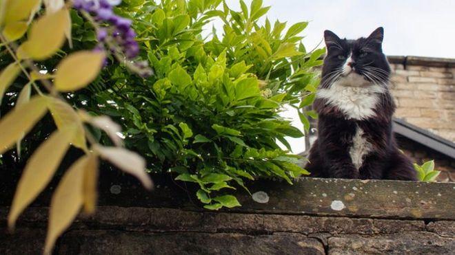 Schrodinger the cat
