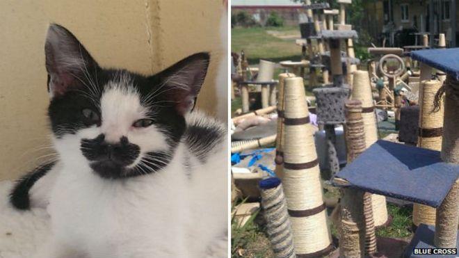 Blue Cross kitten and scratching posts