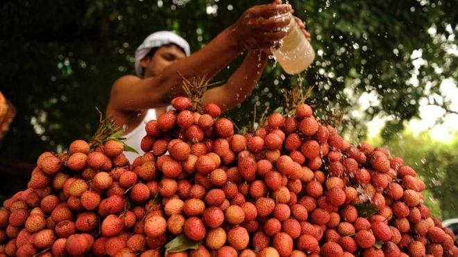 lychee seller in allahabad