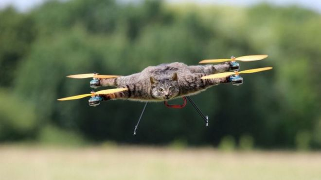 Orville the cat drone flies in the sky