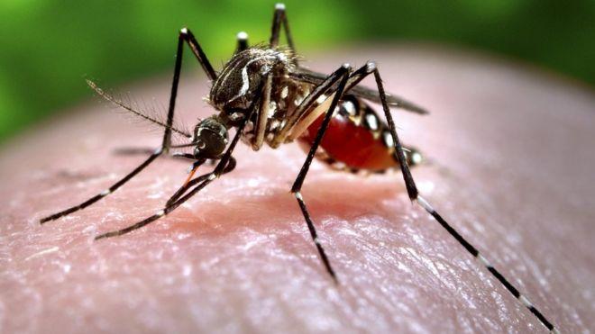 Zika outbreak: The mosquito menace