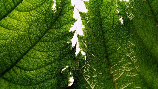 Estudo questiona capacidade das árvores de absorver gás carbônico