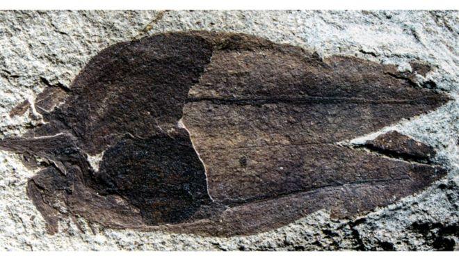 La baya fosilizada.