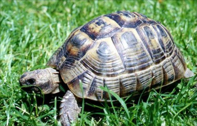 Ella the Tortoise