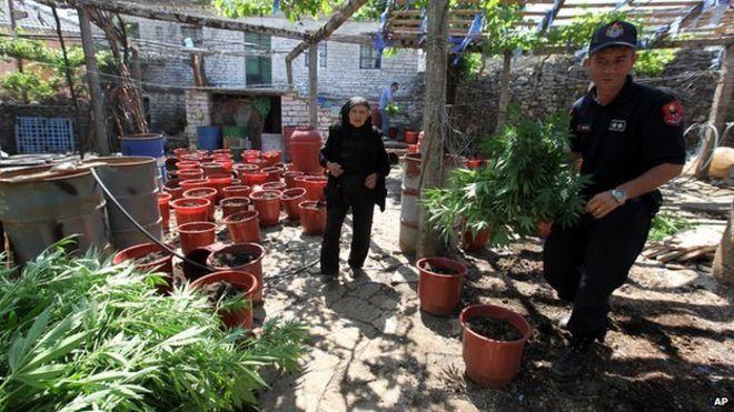 Αποτέλεσμα εικόνας για Albanian CANNABIS
