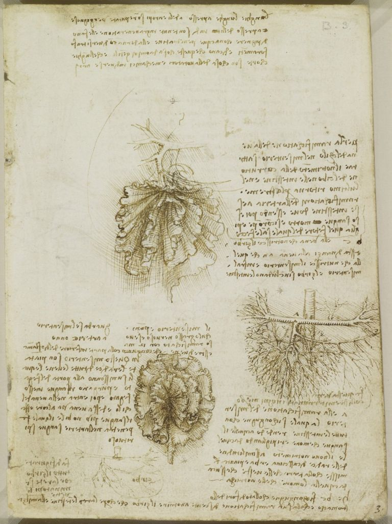 Esboço de Leonardo Da Vinci