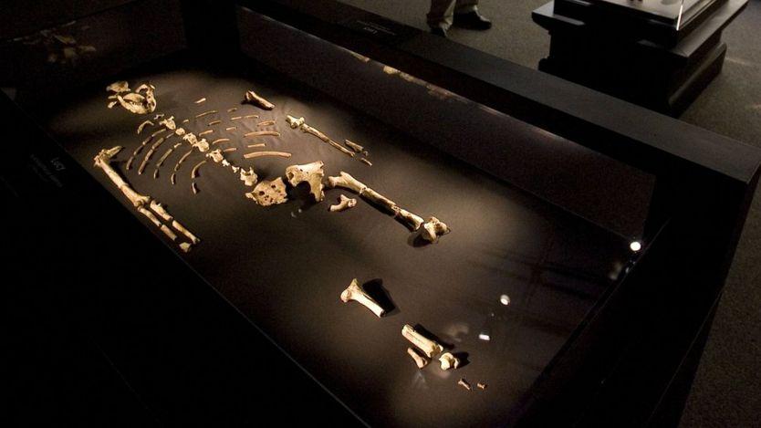 Mẫu xương hóa thạch 'Lucy' Australopithecus afarensis