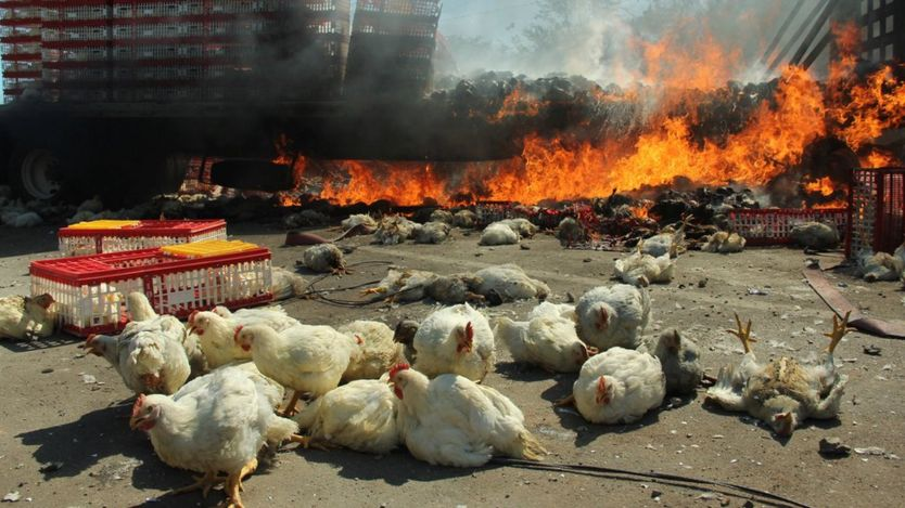 A burning truck, which was carrying chickens, is seen after clashes between riot police officers and protesters from the National Coordination of Education Workers (CNTE)