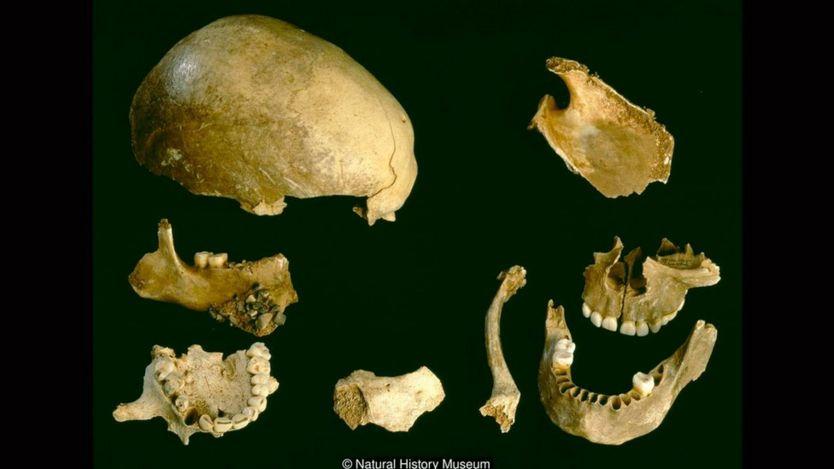 Những xương tìm thấy trong hang động Gough's Cave cho thấy những người này đã bị ăn thịt