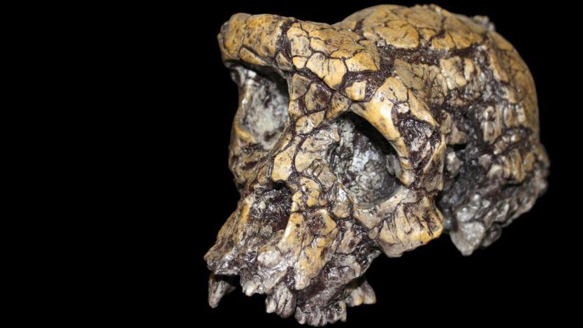 A skull of Sahelanthropus tchadensis