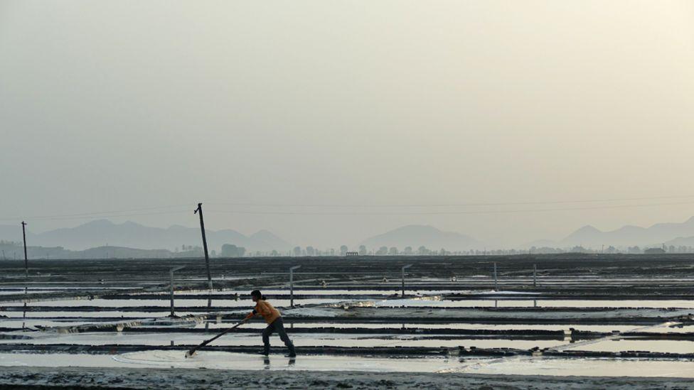 Salt works make good roosting sites for migrating birds, North Korea