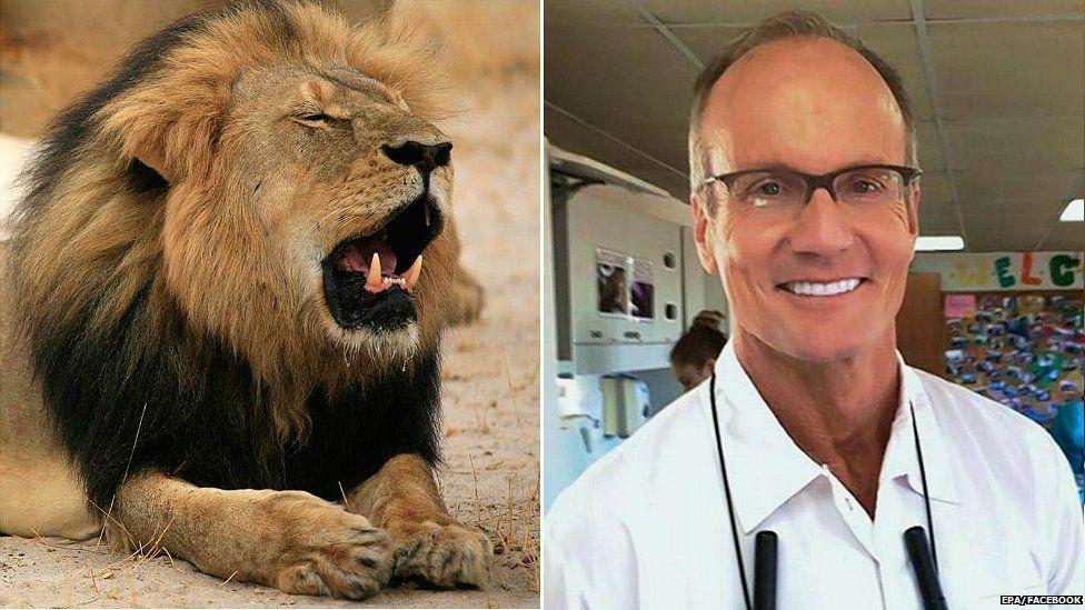 US lion killer 'sorry for disruption'...