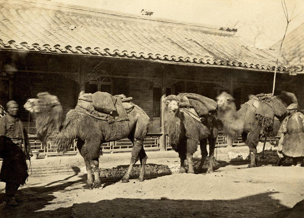Thomas Child. No. 195. Parade of Camels. 1870s. Albumen silver print.