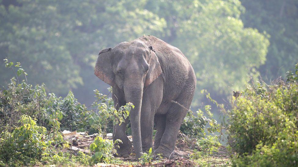 Parkta yalnız fil