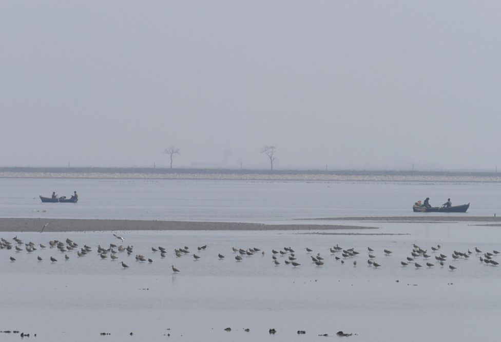 A mixed flock of curlews and bar-tailed godwits on the muddy shores of an estuary, North Korea