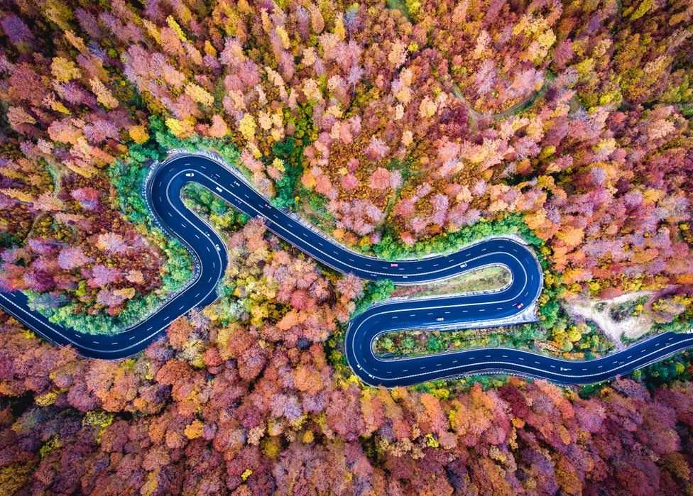 An aerial shot of a winding road and autumnal trees