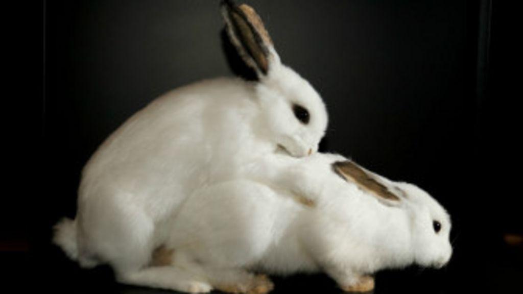 как ебутся кролик с кошкой в фотографиях