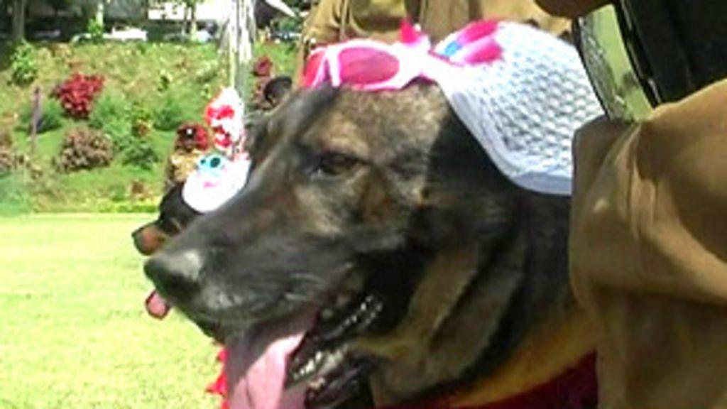 Casamento coletivo de cães causa polêmica no Sri Lanka - BBC ...