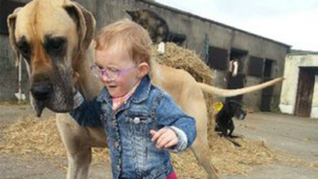 Cão 'prevê' ataques epiléticos de menina na Irlanda - BBC Brasil
