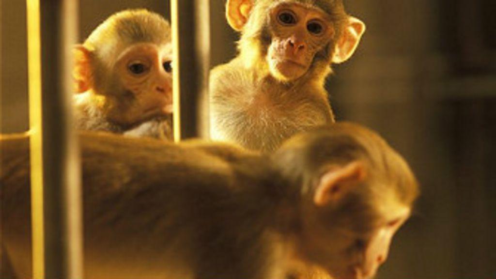 Macaco consegue controlar os movimentos de outro com o ...