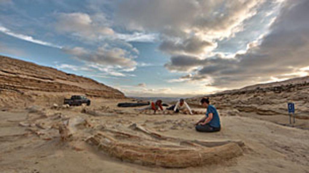 Cientistas 'desvendam' mistério de cemitério de baleias em deserto ...