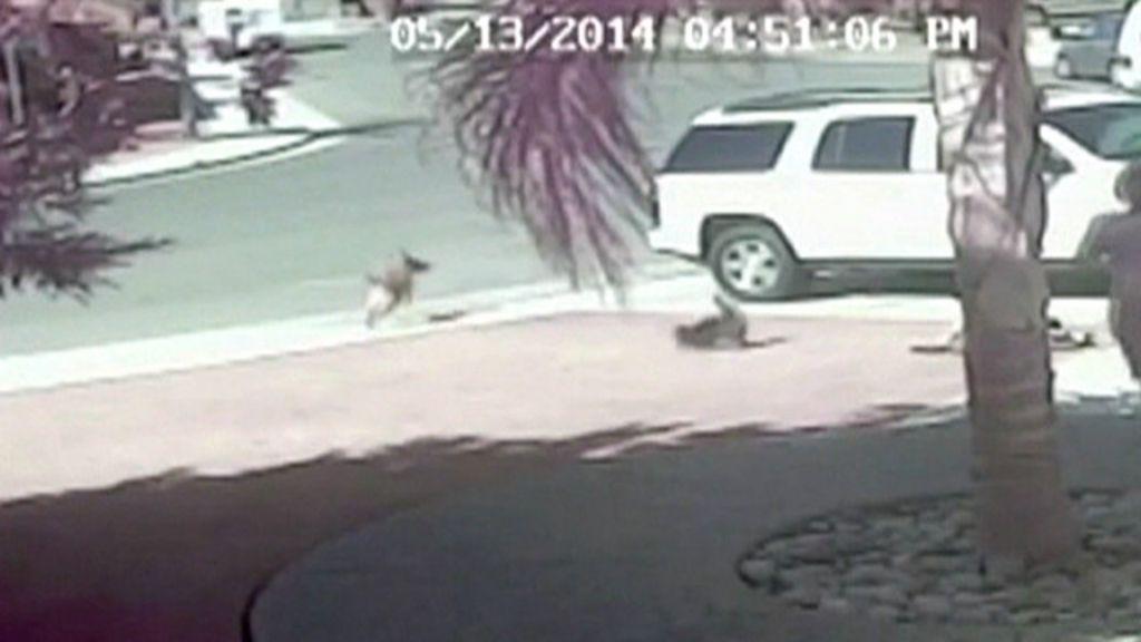 Gata de estimação salva menino de 4 anos de ataque de cão feroz ...