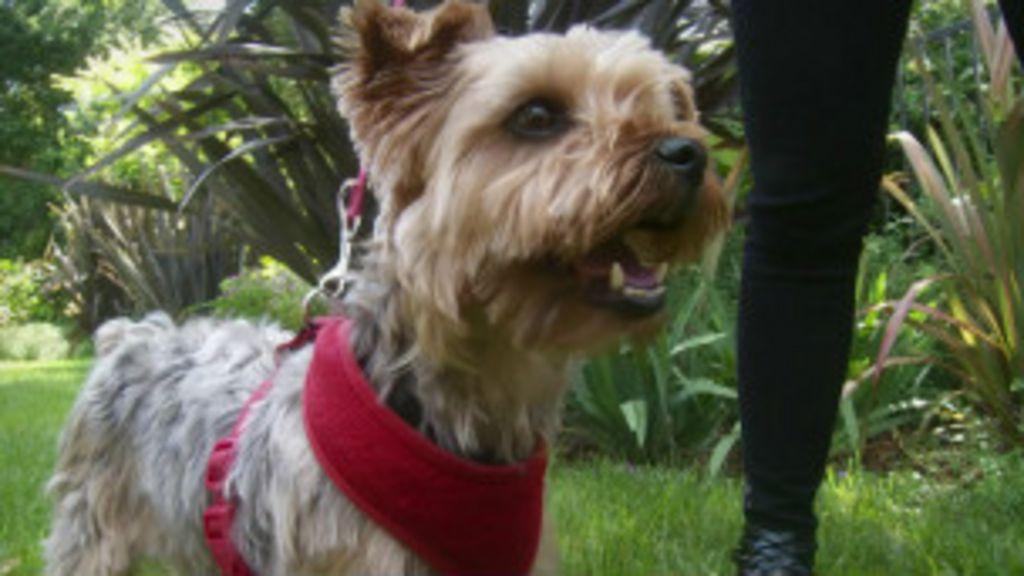 App ajuda a monitorar saúde de animais de estimação - BBC Brasil