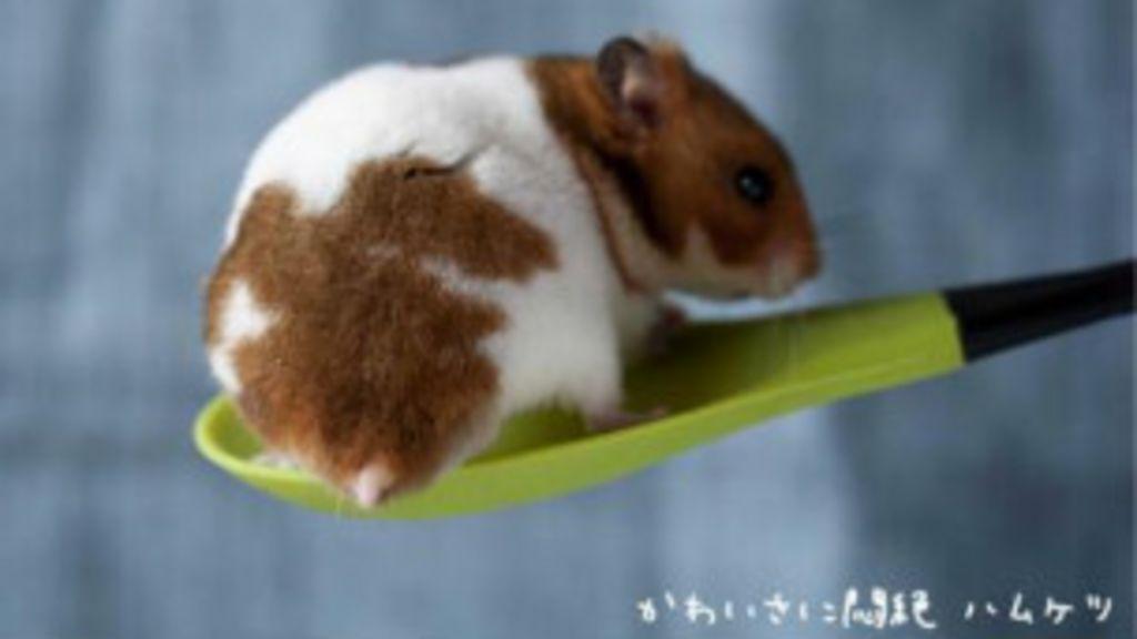 Fotos de ' bumbuns' de hamsters viram mania no Japão - BBC Brasil