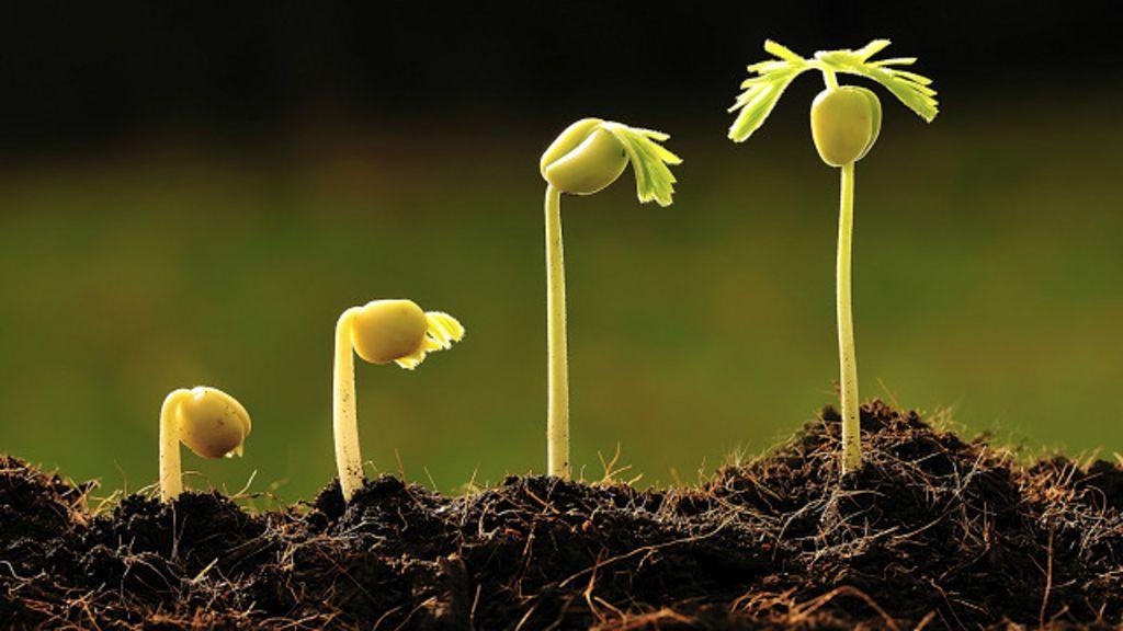 Los argentinos que descubrieron que las plantas reconocen for Que se planta en septiembre