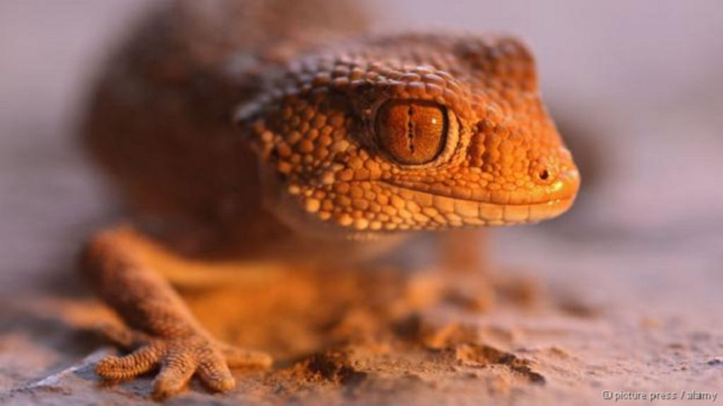 Animais que enxergam no escuro intrigam cientistas - BBC Brasil