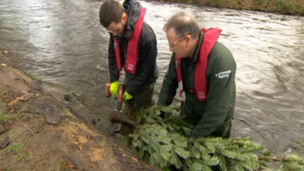Ingleses usam árvores de Natal para conter enchentes - BBC Brasil