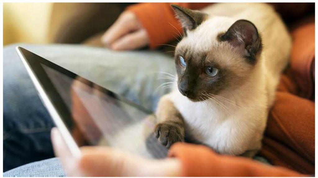 Por que os bichos adoram uma tela de toque? - BBC Brasil