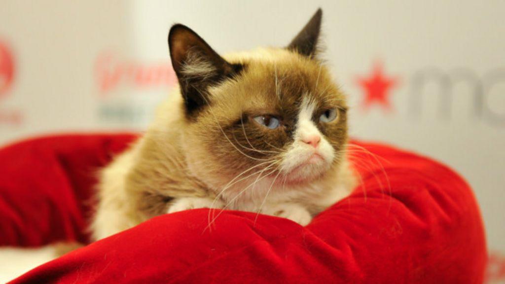 Kenapa Kucing Suka Bersembunyi Dalam Kardus Bbc Indonesia