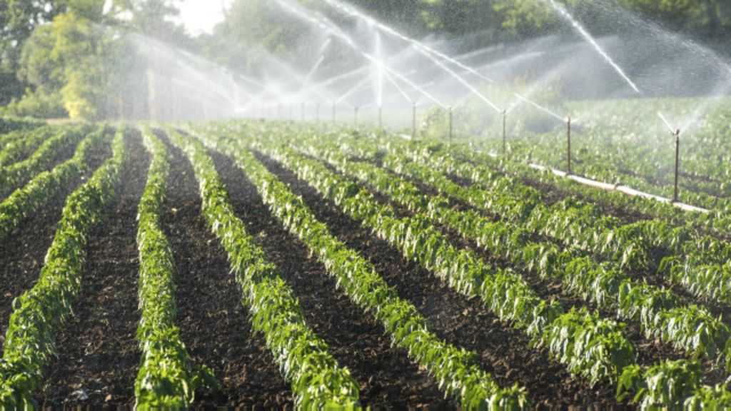 A agricultura é vilã ou vítima na crise hídrica? - BBC Brasil