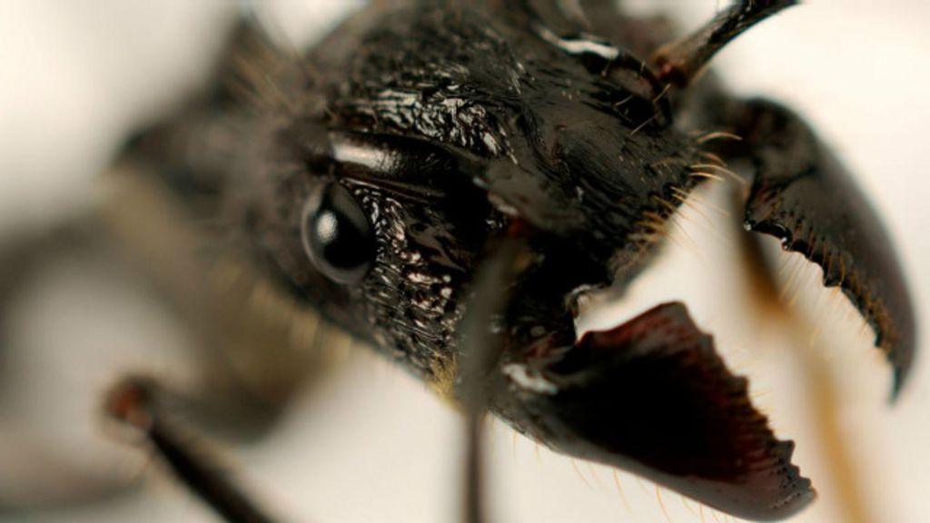 Conheça o homem que se tornou 'sommelier' de picadas de insetos ...