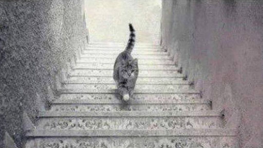 Direção de gato em escada é novo dilema viral em redes sociais ...