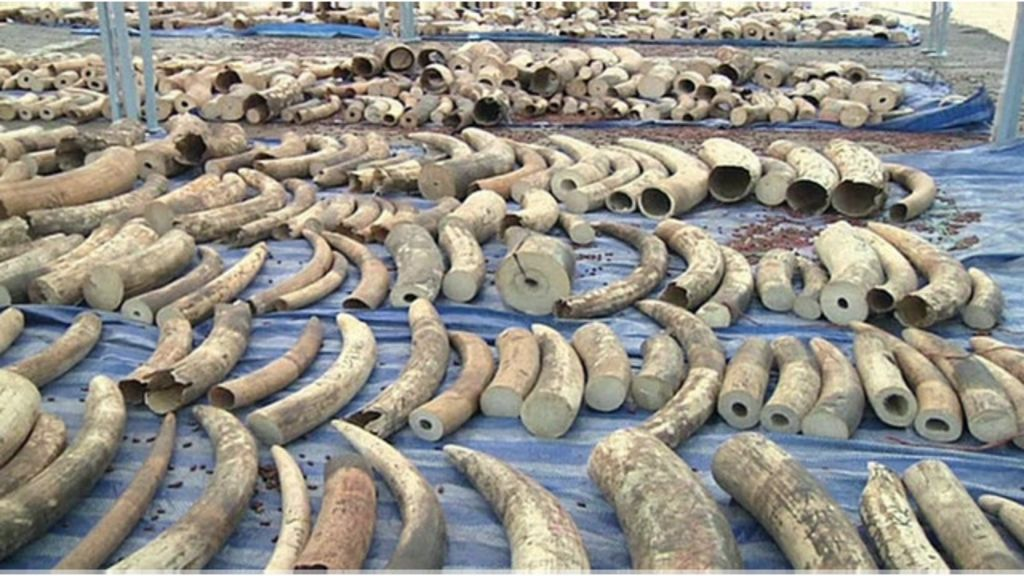 Tailândia faz apreensão recorde de contrabando de marfim - BBC ...